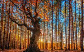 Fotograficzne inspiracje na złotą polską jesień [galeria]